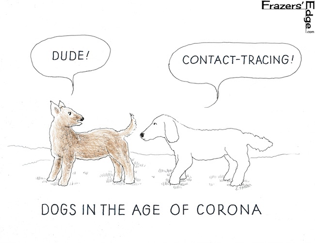 Dogs Contact Tracing LOGO